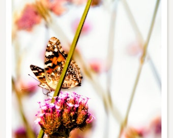 Spotted - Butterfly Photograph - Nature Photography - Animal Photography - Spring Flower Photo - Pink Orange Green