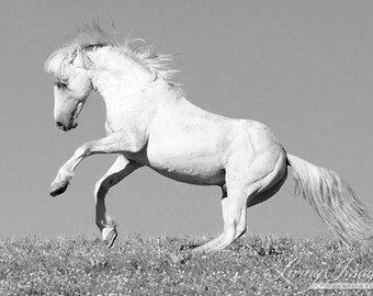 Cloud Rears - Fine Art Wild Horse Photograph - Wild Horse - Cloud - Black and White - Fine Art Print