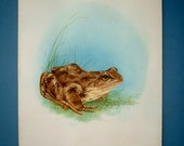 RESERVED Painting of a Frog Toad Signed N J Bickley Vintage Art Watercolor wall Hanging Home Deco