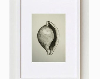 Shell - number 5 - Original drawing on acid free paper Canson  - Pencil graphite wash, pencil, charcoal by Cristina Ripper