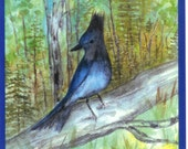 Blue Jay in the woods bird watercolor print card (item - WL12)
