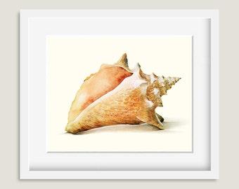 Watercolor Painting - Seashell (b) Painting - Watercolor Seashell - 8 by 10 print - Archival Print, Home Decor, Ocean Art