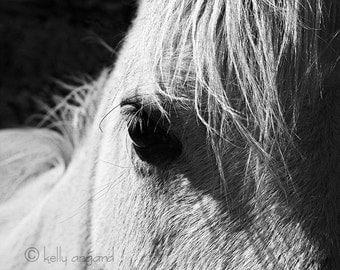 NEW!!! Horse Photograph - black and white horse photography - 8x10 horse photo, horses, eye, closeup, portrait