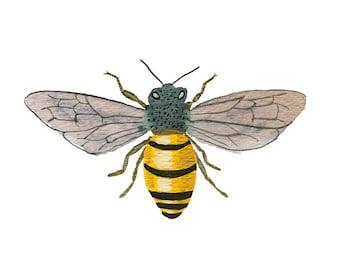 Honey Bee art print - archival fine art