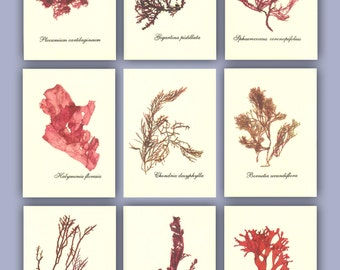 Seaweed art, MADE to ORDER,  miniature Seaweed Herbarium, Alganet Botanical seaweed pressings, pressed seaweed, Set of 9, ACEO size