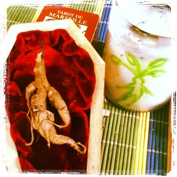 Mandrake Root Alraune in Coffin