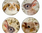 Adorable Bunnies Magnets or Pinback Buttons or Flatback Medallions Set of 4