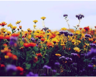 FLOWER FIELD | photography print