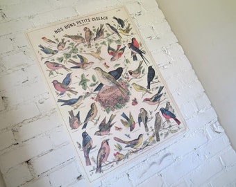 Vintage Style French Oiseaux Bird Decorative Wrap and Craft Paper by Cavallini