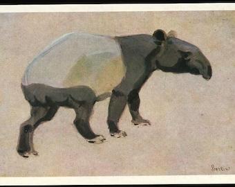 Animal postcard Vintage post card Tapir, Tapirus indicus , V. Vatagin