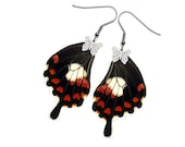 Real Butterfly Wing Earrings (Papilio Polytes Hindwing - E197)