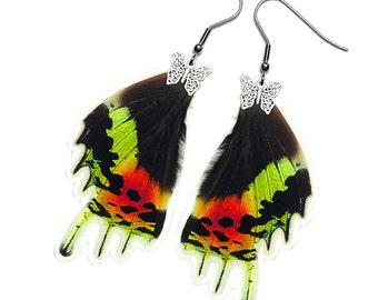 Real Butterfly Wing Earrings (Urania Ripheus HW - E074)