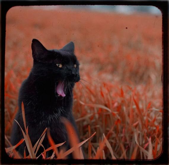 schwarze katze foto cat foto halloween herbstfarben ttv. Black Bedroom Furniture Sets. Home Design Ideas