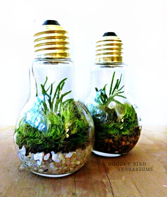 light bulb plant terraium for industrial by doodlebirdie on etsy. Black Bedroom Furniture Sets. Home Design Ideas