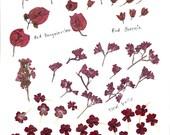 Original clip art digital sheet of red flowers
