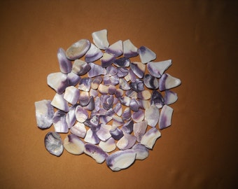 PURPLE SHELL COLLECTION, all natural coloring, 70 pieces, 20 35 year personal colletion of all similar colored shells of purple,clear coated