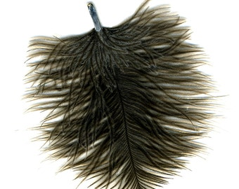 Owl Feather - found object gift from the sky.
