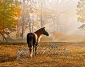 Equine Themed Greeting Card, Glossy Stock, pack of 10 with envelopes, Rocky Mountain High