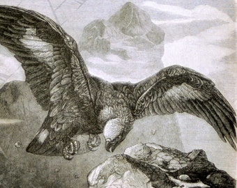 1897 Vintage Print of Eagles - Antique German Engraving of Eagles 1