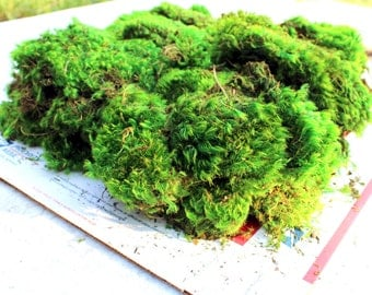 Mood Moss Preserved-bulk up to 4#-Floral supplies-Wedding Supplies-Fairy Garden Parties-NO WATER NEEDED