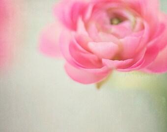 flower photography / pink, ranunculus, soft pink, lime green, spring, botanical, still life / pink petals / 8x10 fine art photograph