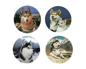 Husky Magnets:  4 Cool Huskies for your home, your collection,  or to give as a unique gift