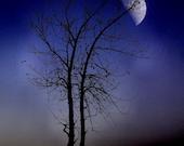 "Surreal violet tree dark night sky full moon navy blue autumn gothic - ""Purple haze"" 8 x 10"