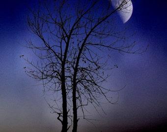 "Surreal violet  tree dark night sky full moon navy blue dusk gothic nature autumn fall - ""Purple haze"" 8 x 10"