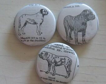 Mastiff Vintage Dictionary Illustration Magnet Set of 3