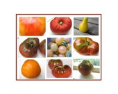 Tomato Gourmet Variety 9 Tomato Seed Packets, Organic Gift set