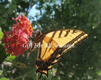 Swallowtail Butterfly on Lantana-4x6 Original Photograph-Nature's Photography-Frozen In Time