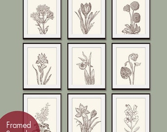 Wild Flower Botanical Prints (Series G) Set of 9 - Art Prints -(Featured in Cream and Chocolate)
