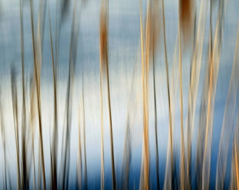 Winter Reeds, Brown and Blue, Abstract Nature Photography, 11X14 Mat, Fine Art, Wall Hanging, Ready to Frame