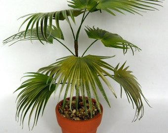 CHINESE FAN PALM in terracotta pot handmade dolls house miniature  conservatory plant 12th dollhouse