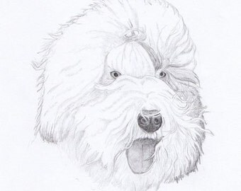 Old English Sheepdog Signed Personalized Original Pencil Drawing Double Matted Print -Free Shipping- Desert Impressions