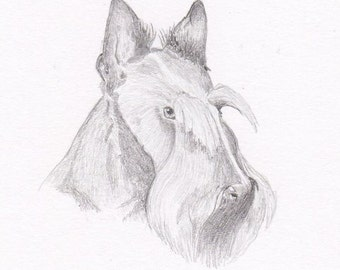 Scottie Signed Personalized Original Pencil Drawing Double Matted Print -Free Shipping- Desert Impressions