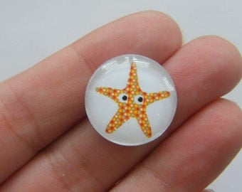 6  Starfish ocean glass cabochon seal dome 20mm G3