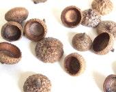 50 Acorn Caps Unfinished Medium Oak Tops O