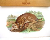 vintage antique wild cat print.spooky.Halloween.frameable.nature picture.woodland.forest.tessiemay