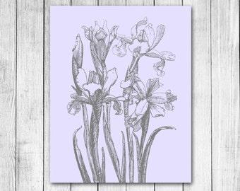 Vintage Iris Pencil Drawing Floral Illustration Reproduction Digital Art Print