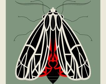 Tiger Moth screen print