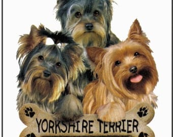Yorkshire Terrier Dog Womans T Shirt Yorkie Puppies with Bone Biscuit 10810
