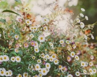 Flower Photography, Spring Decor, Modern, White, Green, Neutral, Feminine, Girls Wall Art, Nature, Daisies Print - Secret Garden