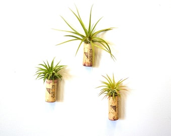 "GARDEN -""Multiplicity"" - Set of 3 Wine Cork Planters w/Magnets - Salvaged and Upcycled"