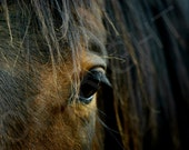 Equestrian Country Chestnut Brown Horse Eye Western Riding Rustic wall Art Photography Print