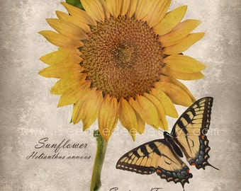 Sunflower with Swallowtail Botanical Print - Vintage Style Original Photograph - Butterfly Shabby Autumn Fall Yellow Gold Sepia Home Decor