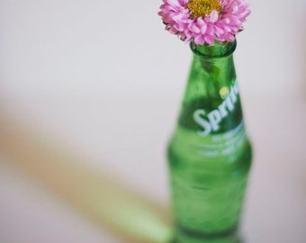Pink and Green - 8x10 Fine Art Photograph