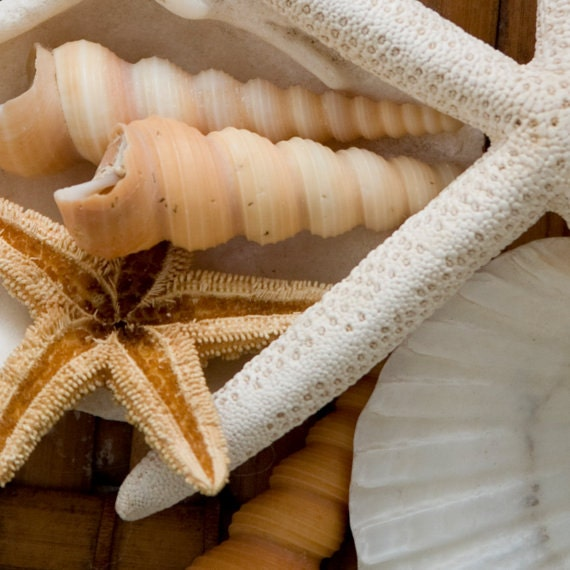 Sill Life,Gifts of the Sea, 8x8 or 12x12 fine art photography print, shells, ivory, cream, mocha, cottage, coastal home decor