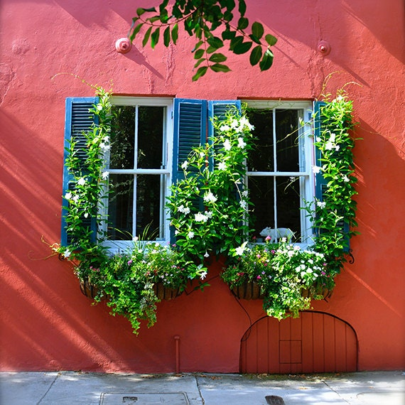 Art, Photography, City Photography, Window Boxes, Charleston, Wall Art, Fine Art Photo, Home Decor, 5x5 and larger fine art print