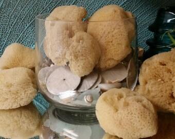 Set of 3/ Silky Smooth Facial Sea Sponges/ Natural Bath & Beauty Sea Sponge/ Small Mini Size